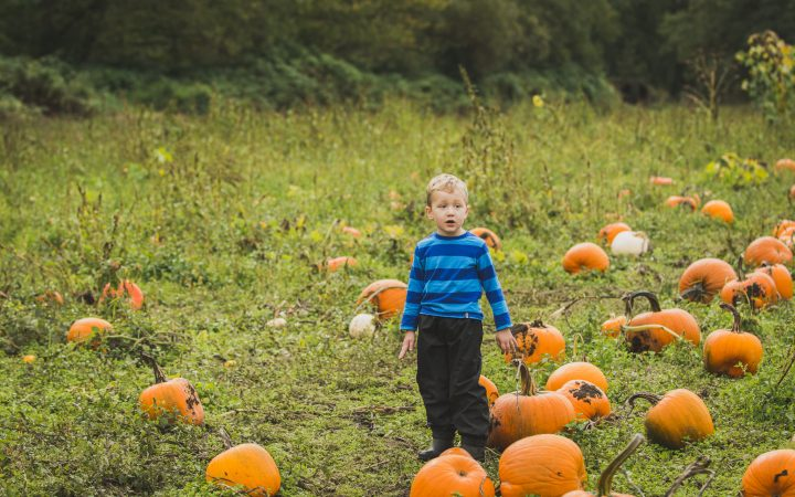 Pumpkins at Hazelmere in South Surrey