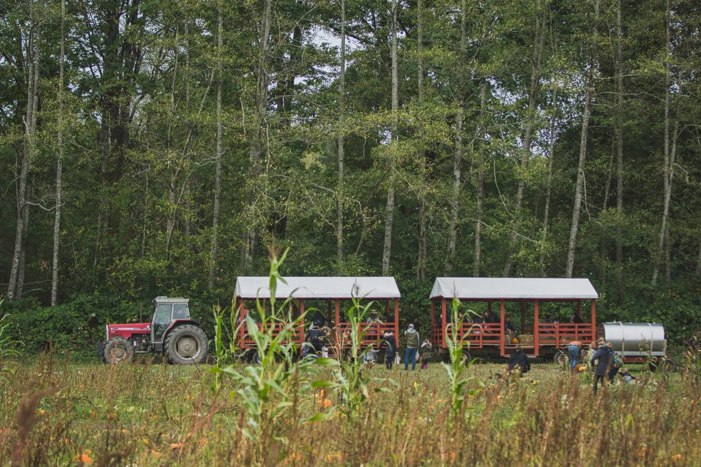 Tractor with hayride to and from the pumpkin patch